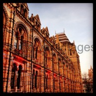 Natural History Museum, London 010