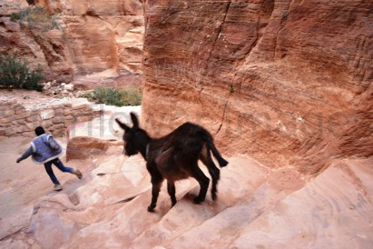 a baby donkey being taught how to walk the steep and often gritty steps