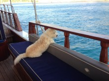 Dog living on boat 001