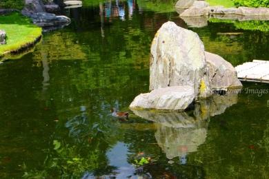 Kyoto Gardens IMG_2452_1024