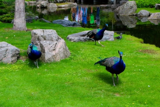 Kyoto Gardens IMG_2461_1024