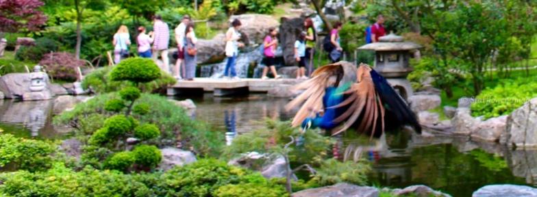 Kyoto Gardens IMG_2472_1024