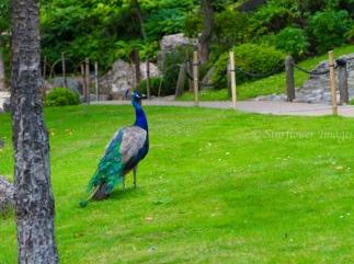 Kyoto Gardens IMG_2478_1024