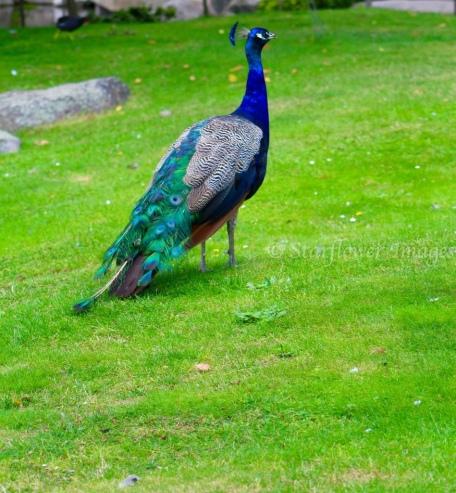 Kyoto Gardens IMG_2481_1024