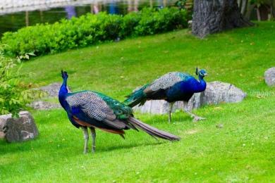 Kyoto Gardens IMG_2485_1024