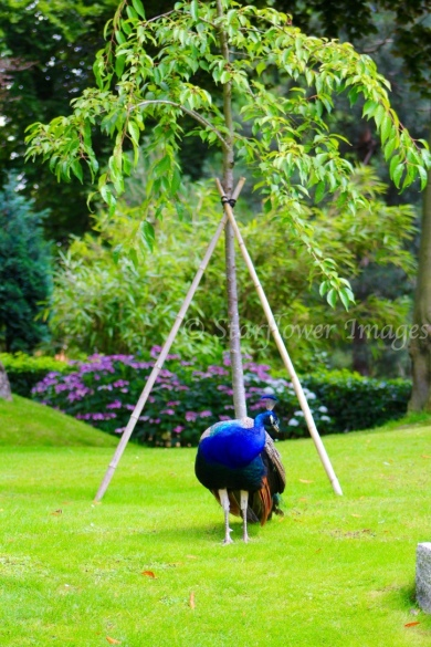 Kyoto Gardens IMG_2500_1024