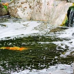 Kyoto Gardens IMG_2502_1024