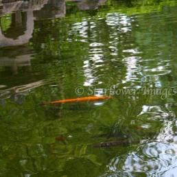 Kyoto Gardens IMG_2545_1024