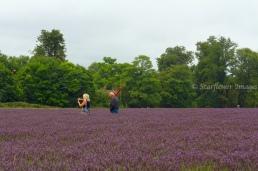 Lavender fieldIMG_2606_1024