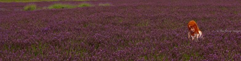 Lavender fieldIMG_2665_1024