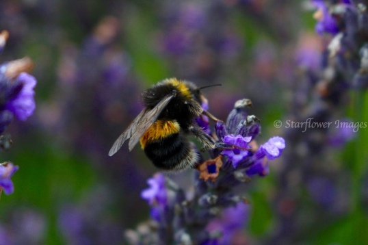 Lavender fieldIMG_2699_1024