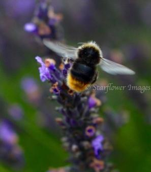 Lavender fieldIMG_2707_1024