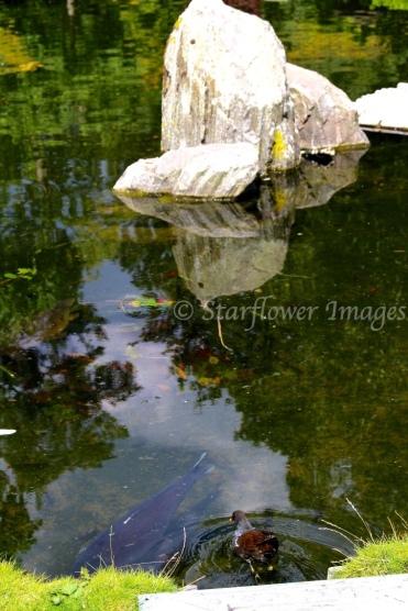 Kyoto Gardens_2450_1024