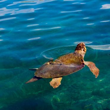 Local wildlife, Meiz Island